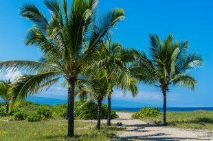 hawaii-1358992_640(1)